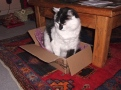 Max tries to fit in an Amazon box