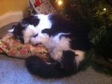 Max asleep on the Christmas presents