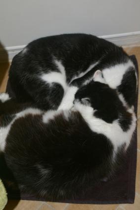 Max and Rio share the bath mat