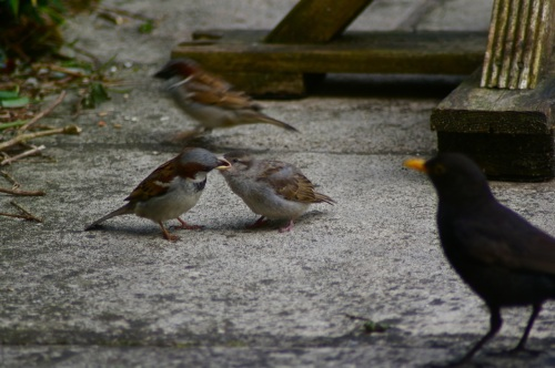 feeding time at sparrow hedge