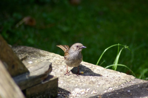 me? a sparrow?I think not!