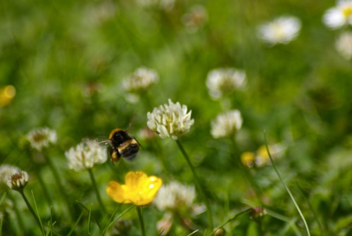 bees...love the sound of them and their furry cuddliness