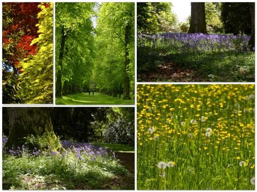Westonbirt Arboretum
