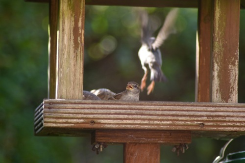 bird table - the new soap opera