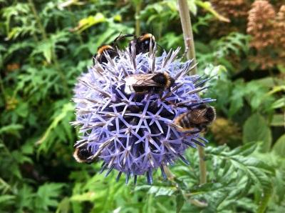 Dyrham Park bees