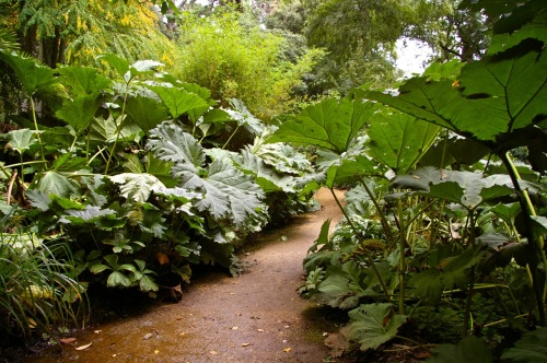 love the huge gunnera - gives it a really Jurassic feel