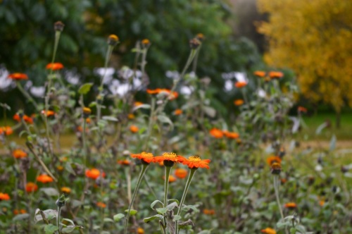orange - makes the greyest of days sunny