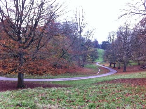 Dyrham Park - walking down the drive through the deer park