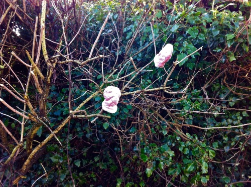 the mitten tree