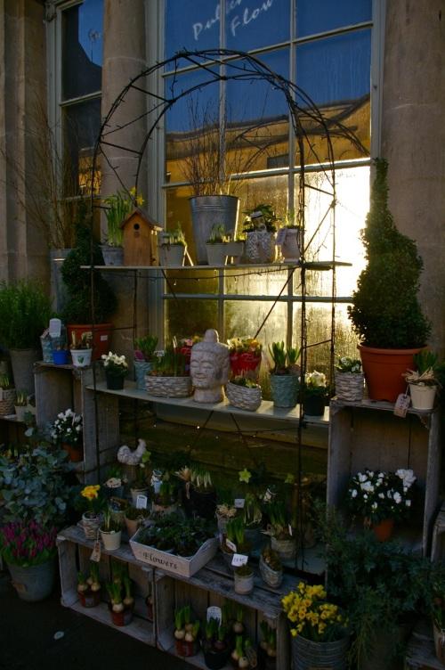 sunlight through the florist shop