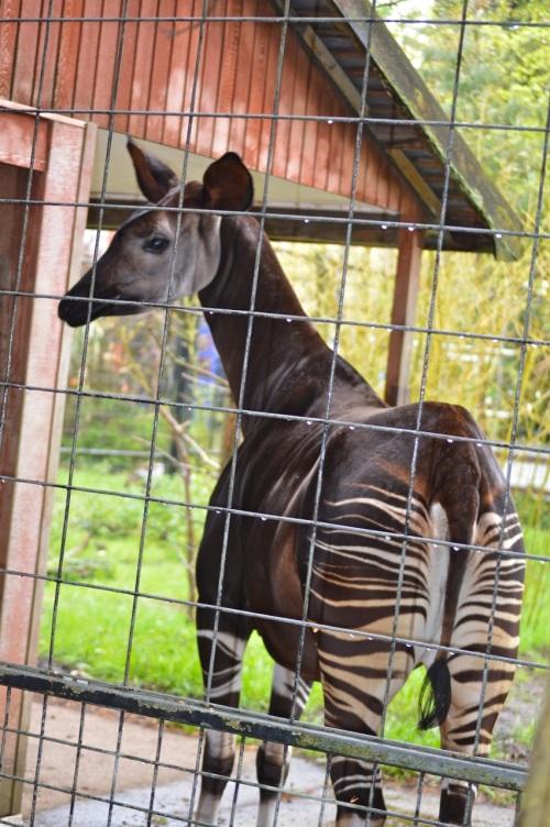 bristol zoo - 088