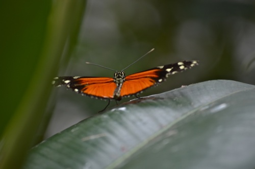 bristol zoo - 094