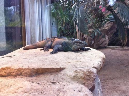 bristol zoo - 157