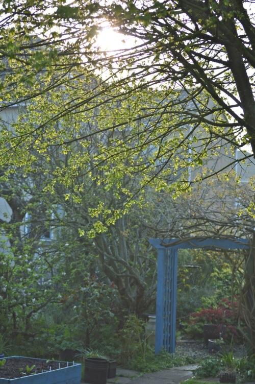 garden 21 april 2014 - 60
