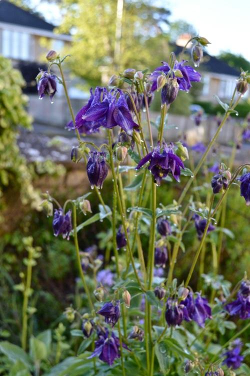 garden 14 may 2014 - 01