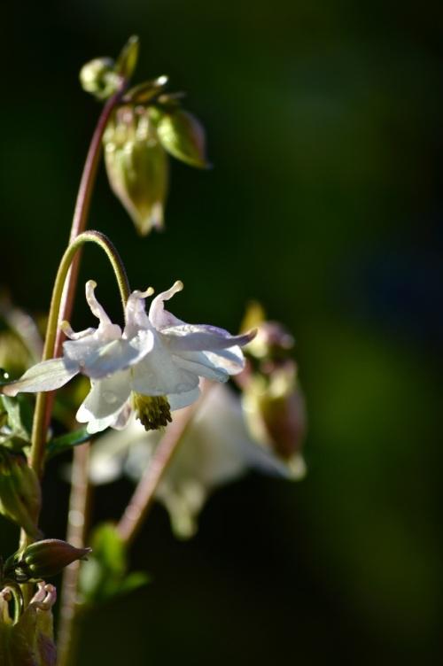 garden 14 may 2014 - 12