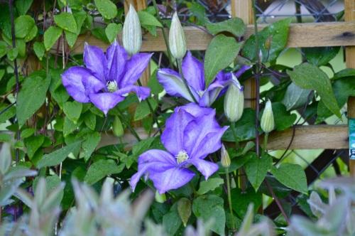 garden 14 may 2014 - 23