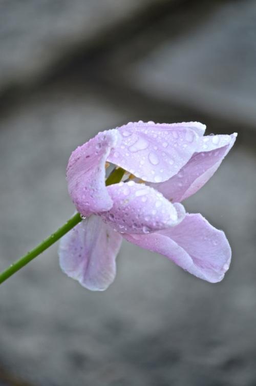 garden 14 may 2014 - 66