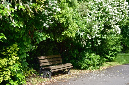 2014 May 5 Bath WI garden - 028