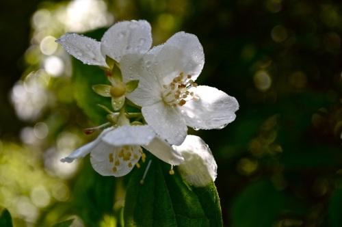 2014 May 5 Bath WI garden - 036