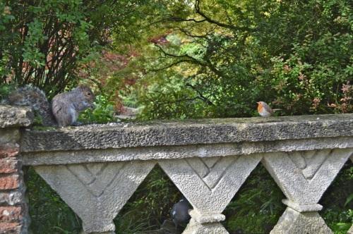 2014 May 5 Bath WI garden - 057