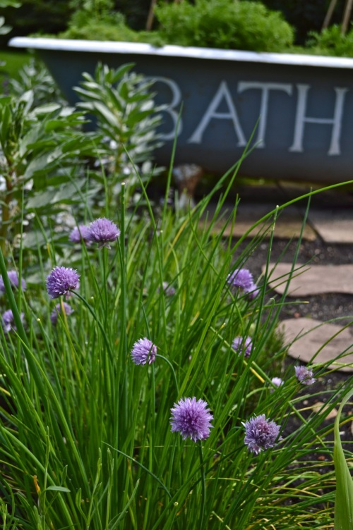 2014 May 5 Bath WI garden - 067