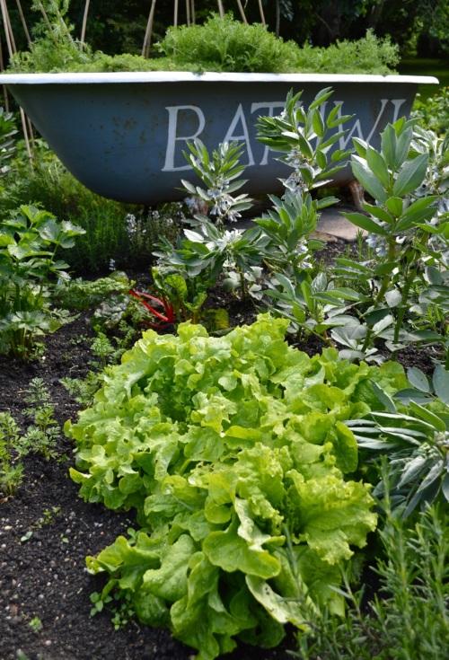 2014 May 5 Bath WI garden - 073