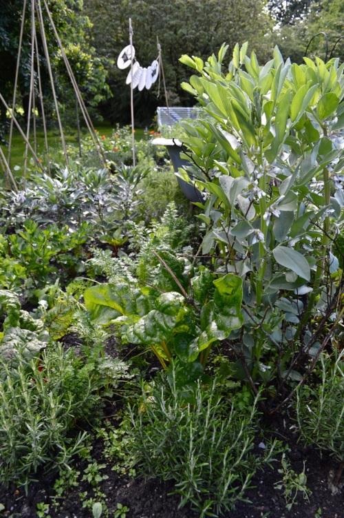 2014 May 5 Bath WI garden - 078