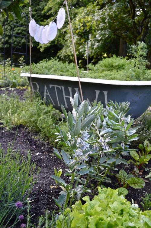 2014 May 5 Bath WI garden - 079