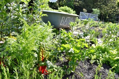 2014 May 5 Bath WI garden - 082