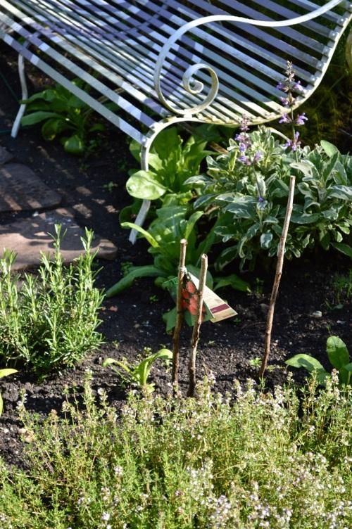 2014 May 5 Bath WI garden - 089