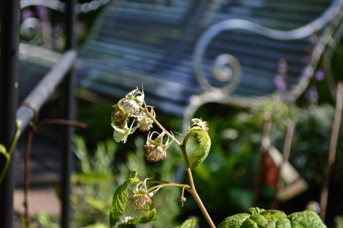 2014 May 5 Bath WI garden - 094
