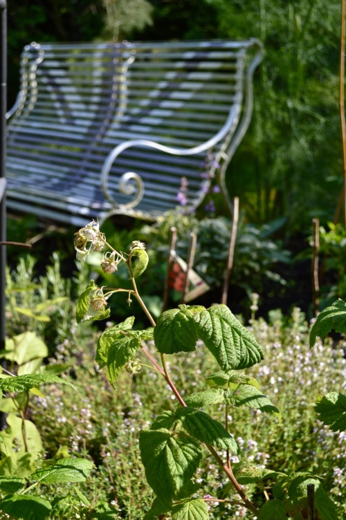 2014 May 5 Bath WI garden - 095