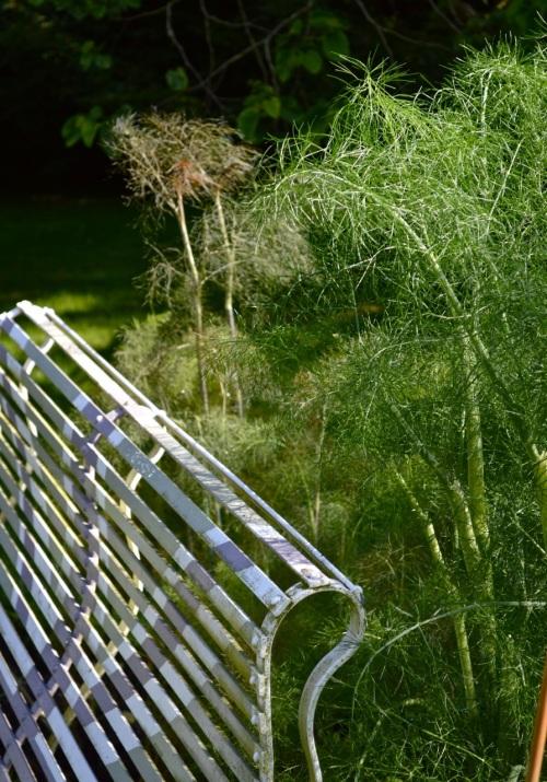 2014 May 5 Bath WI garden - 097