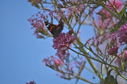 Guernsey June 2014 - 485