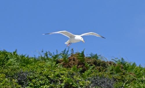Guernsey June 2014 - 528