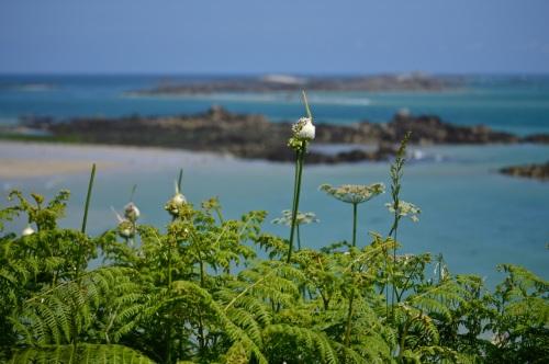 Guernsey June 2014 - 568