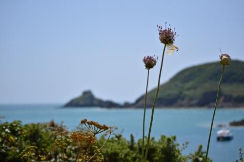 Guernsey June 2014 - 623