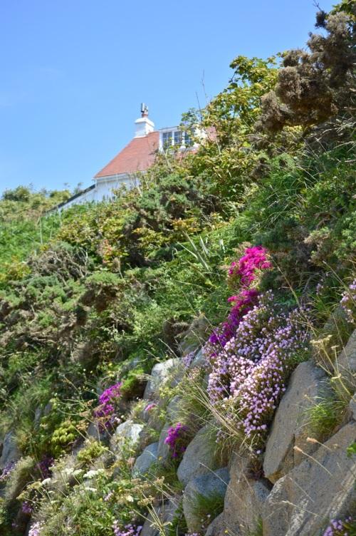 Guernsey June 2014 - 645