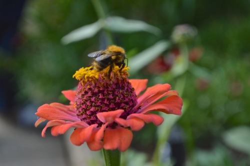 Yeo Valley Gardens 7 Sept 2014 - 022