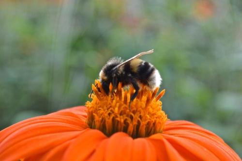 Yeo Valley Gardens 7 Sept 2014 - 039