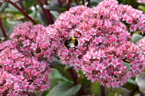 Yeo Valley Gardens 7 Sept 2014 - 148