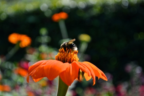 Yeo Valley Gardens 7 Sept 2014 - 233
