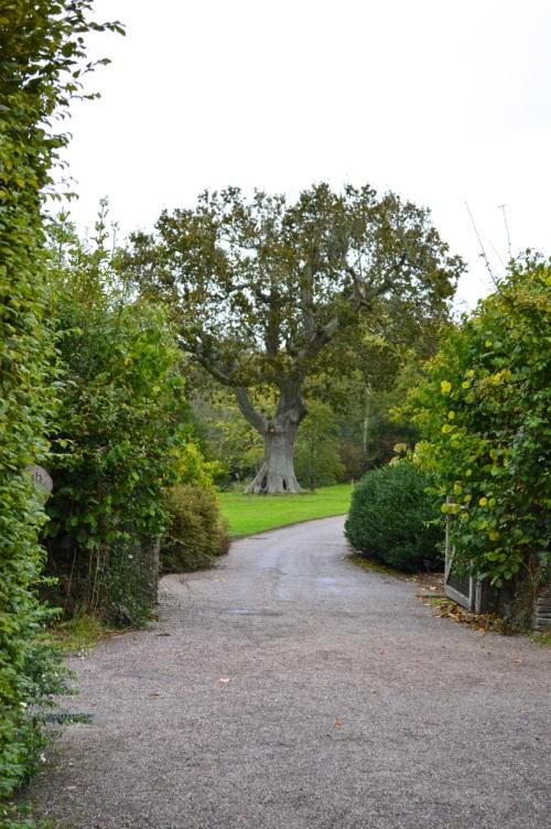 arlington court and rosemoor - 087