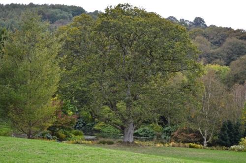 arlington court and rosemoor - 098