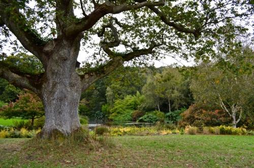 arlington court and rosemoor - 131