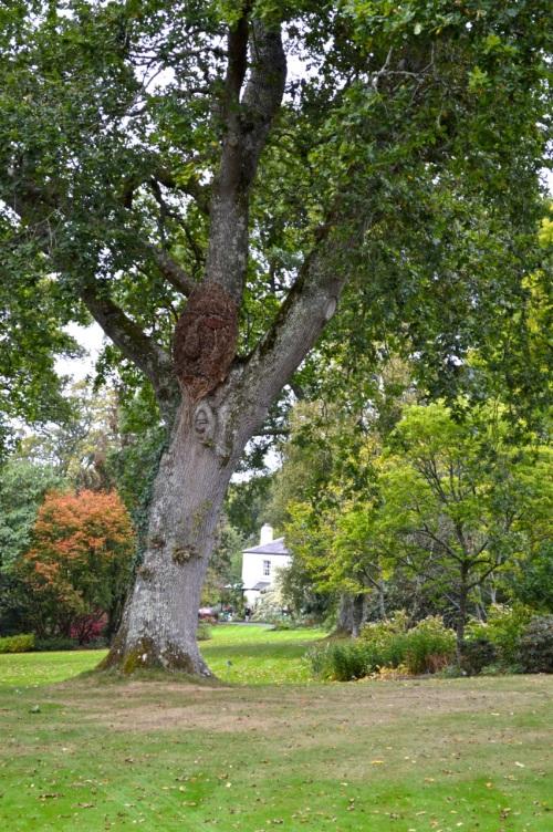 arlington court and rosemoor - 147