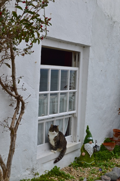 clovelly and appledore - 052