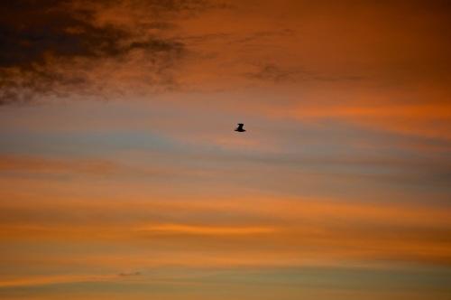 sunrise1 - 29