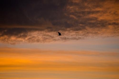 sunrise1 - 36
